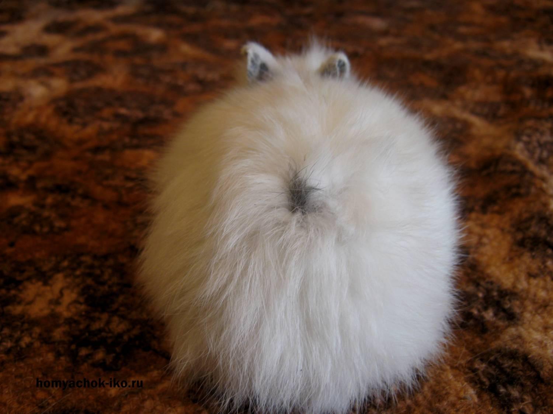 Раздавливиет задницей кролика 16 фотография