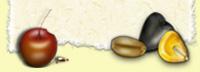 Топинамбур - кролики и морские свинки - Кормление животных - Каталог статей - Хомячок и К
