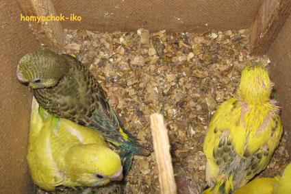 Подросшие птенцы. 21.11.08