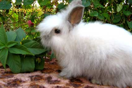 Чем кормить кролика?